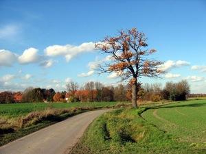 Landschaft Münsterland 03